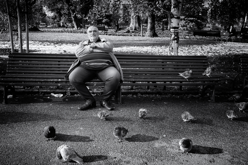 The man and the pigeons