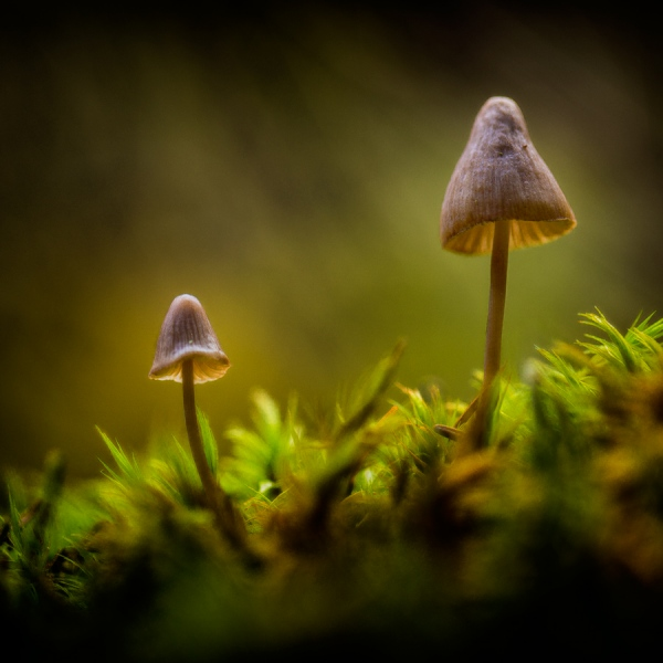 Micro mushrooms