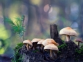 Forest mushrooms